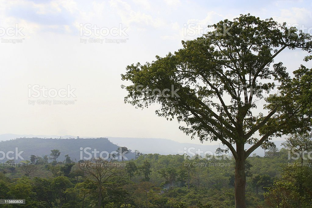 mountains and rainforest stock photo