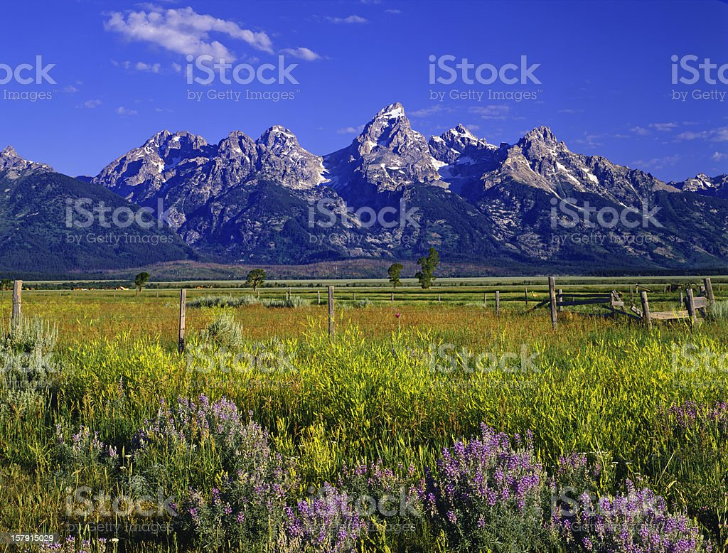 Mountains and wildflowers at Grand Teton National Park stock photo