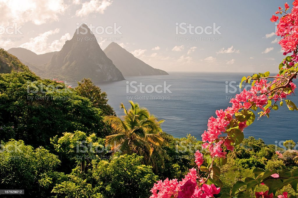 Mountains by the ocean in St Lucia with pink flowers stock photo