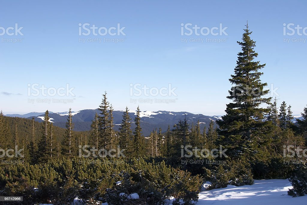 Mountains covered with fir forest royalty-free stock photo