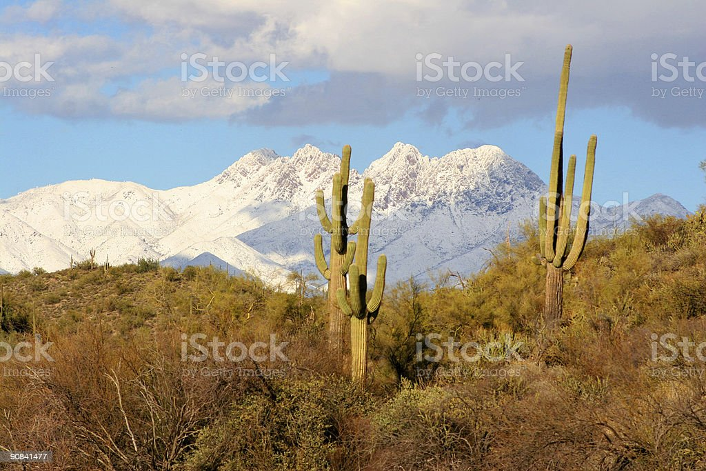 Mountains, Desert, Saguaro and Snow stock photo
