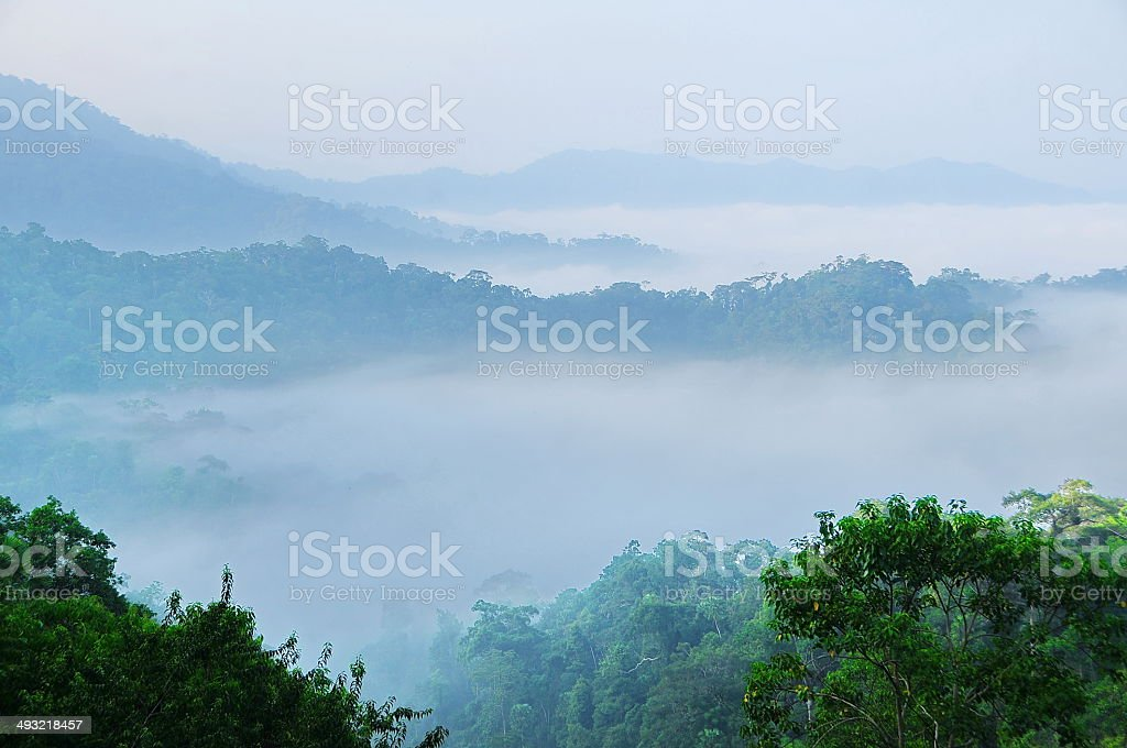 Mountains fog forest at dawn royalty-free stock photo