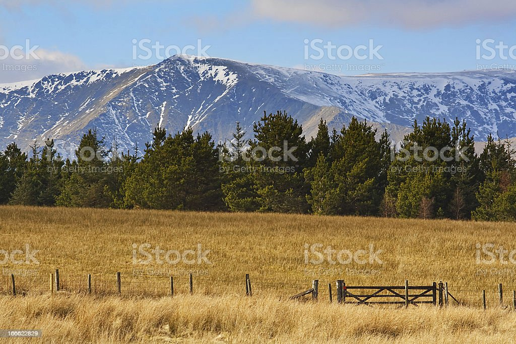 mountains fur trees fields royalty-free stock photo