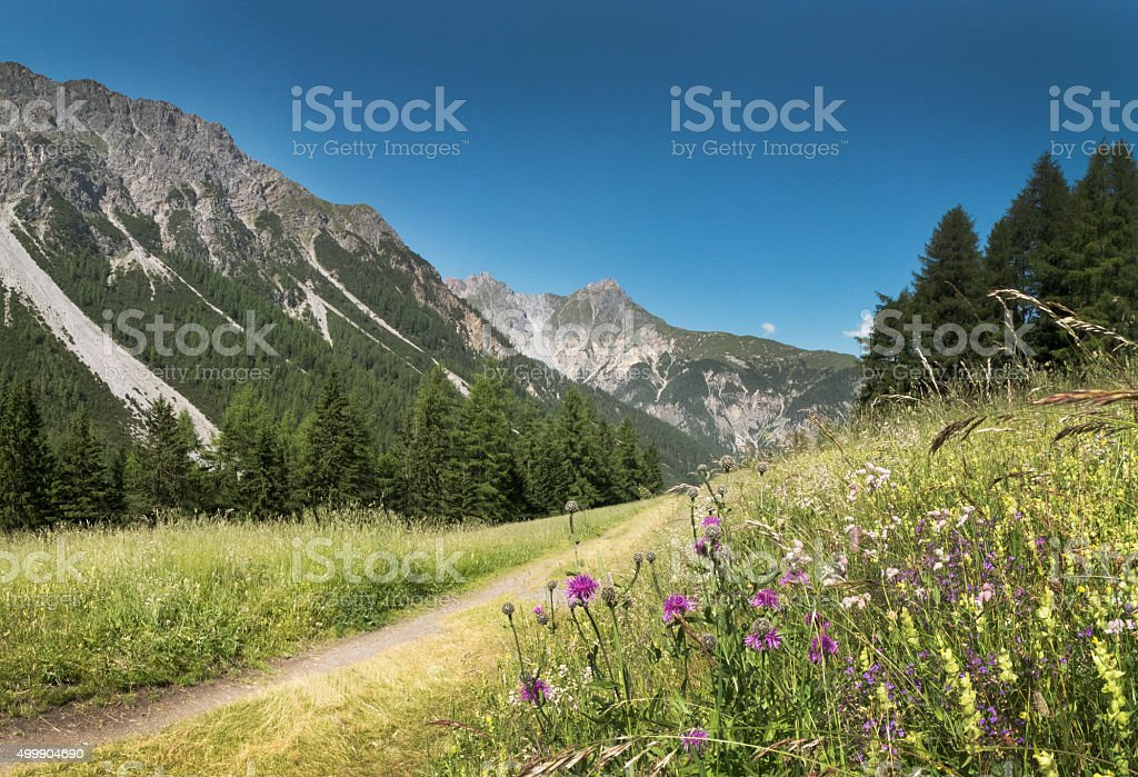 Mountains  in the Alps with flowers at valley Val d'Uina stock photo