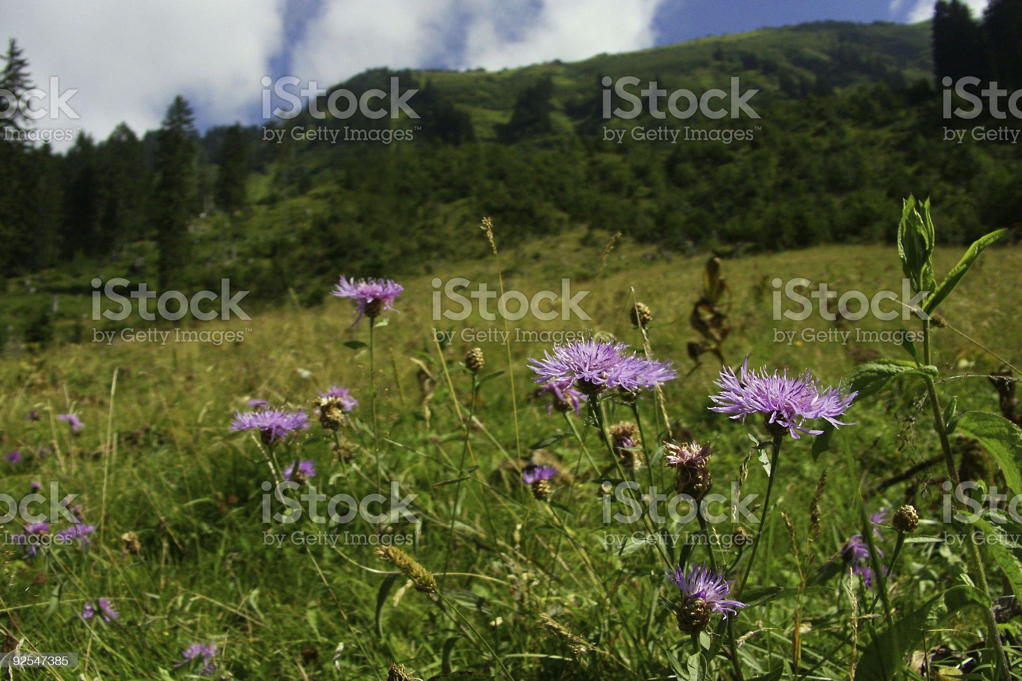 Mountains nearby Obersdorf royalty-free stock photo