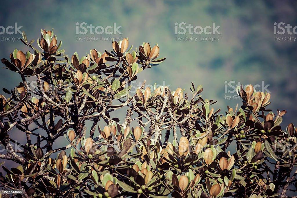 Mountains tree in Sri Lanka stock photo