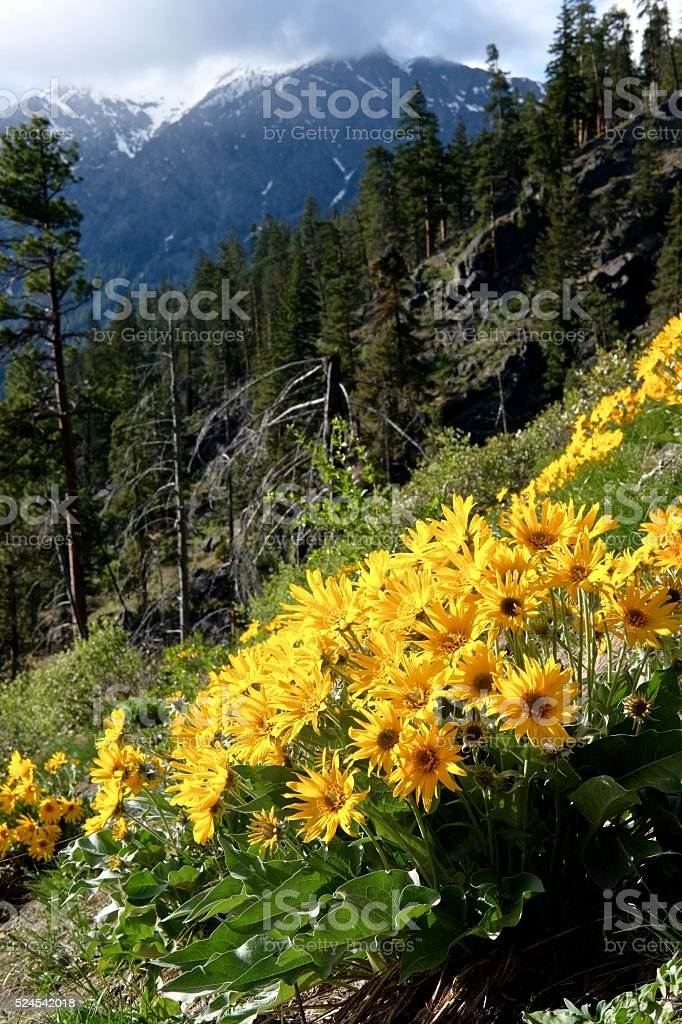 Mountains, Yellow Flowers, Clouds. stock photo