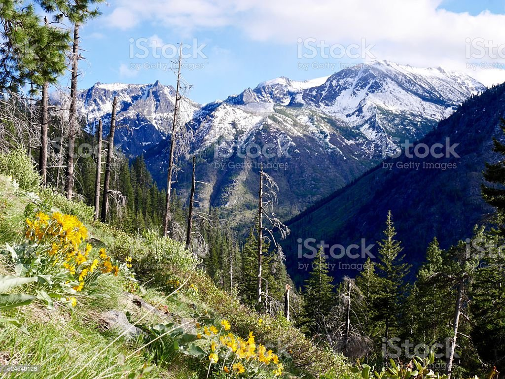 Mountains, Yellow Flowers, Trees and Clouds. stock photo