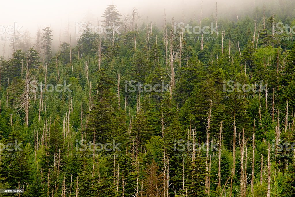 Mountainside in clouds stock photo