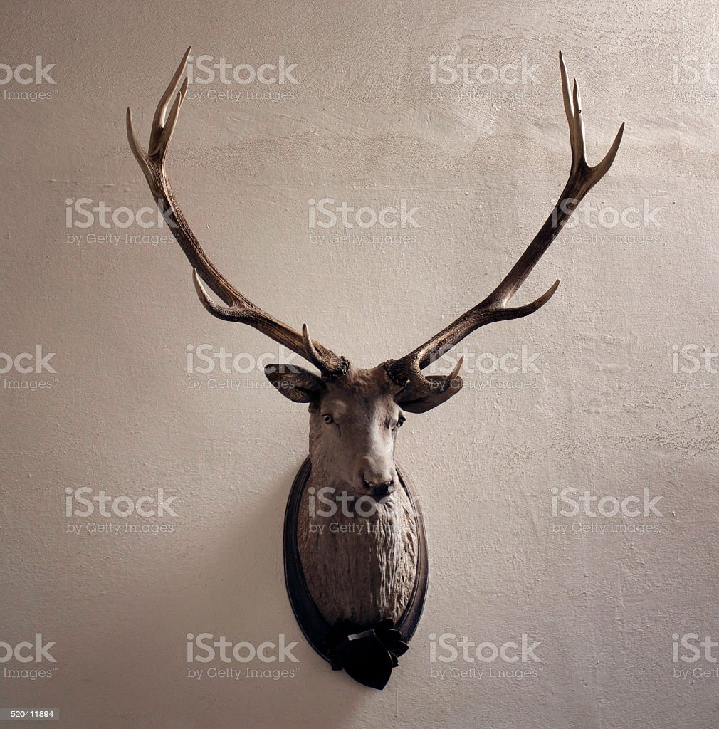Mounted head of deer. Stuffed stag with monumental antlers. stock photo