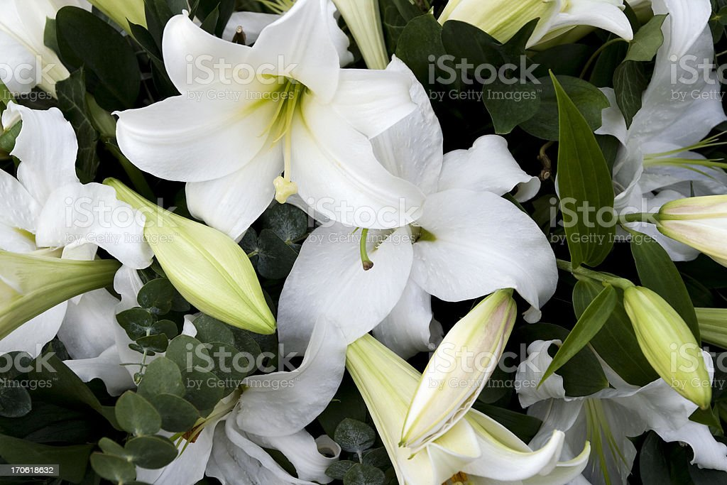 Mourning lilies stock photo