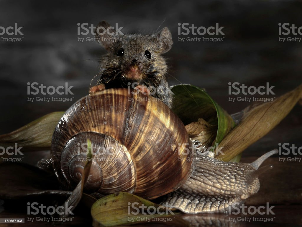Mouse & Snail stock photo