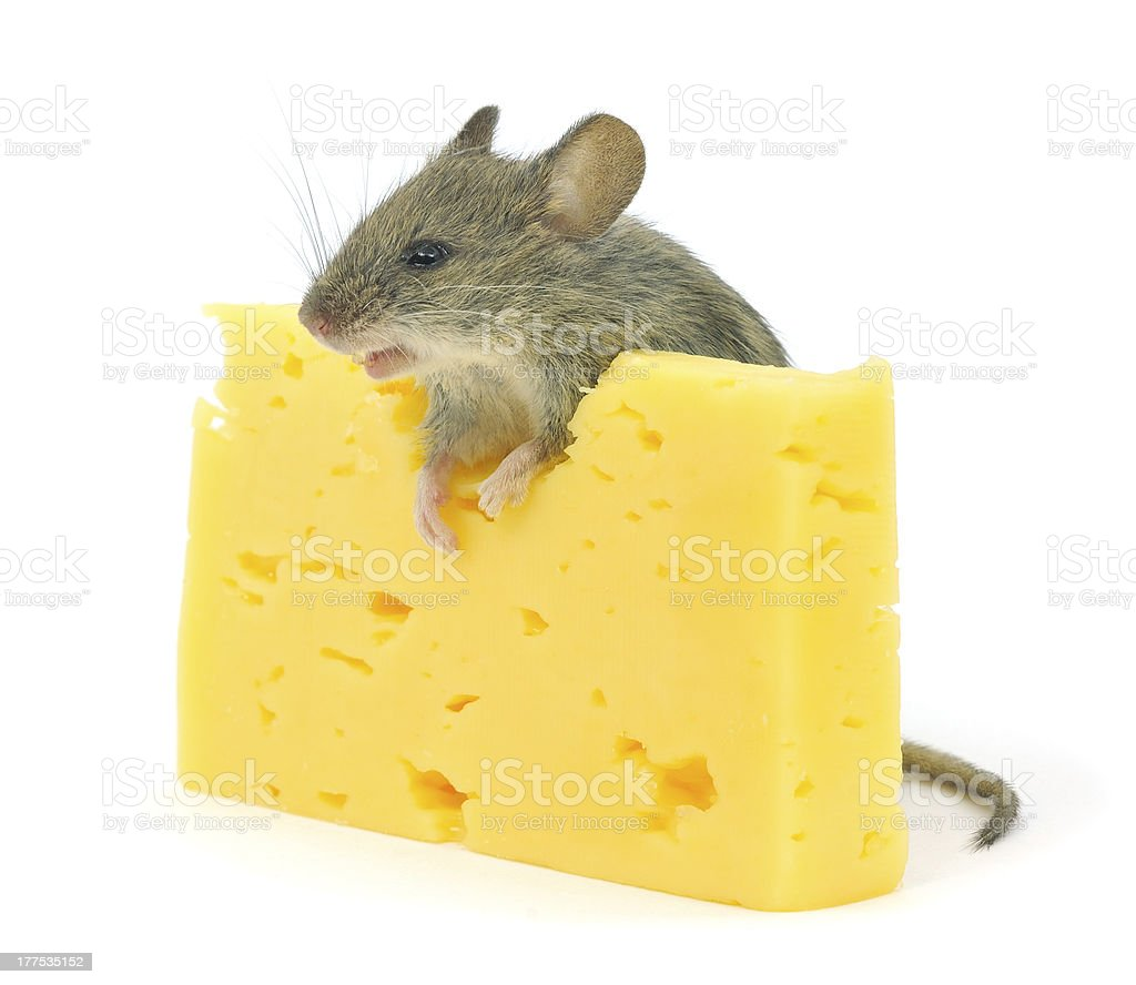 mouse and cheese royalty-free stock photo