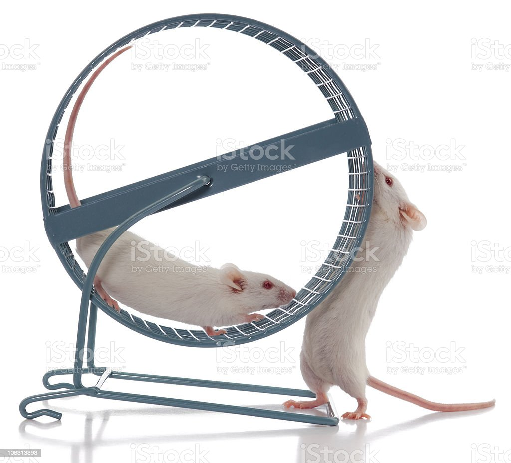 Mouse Boss Always Wants Exercise Wheel to Spin Faster stock photo