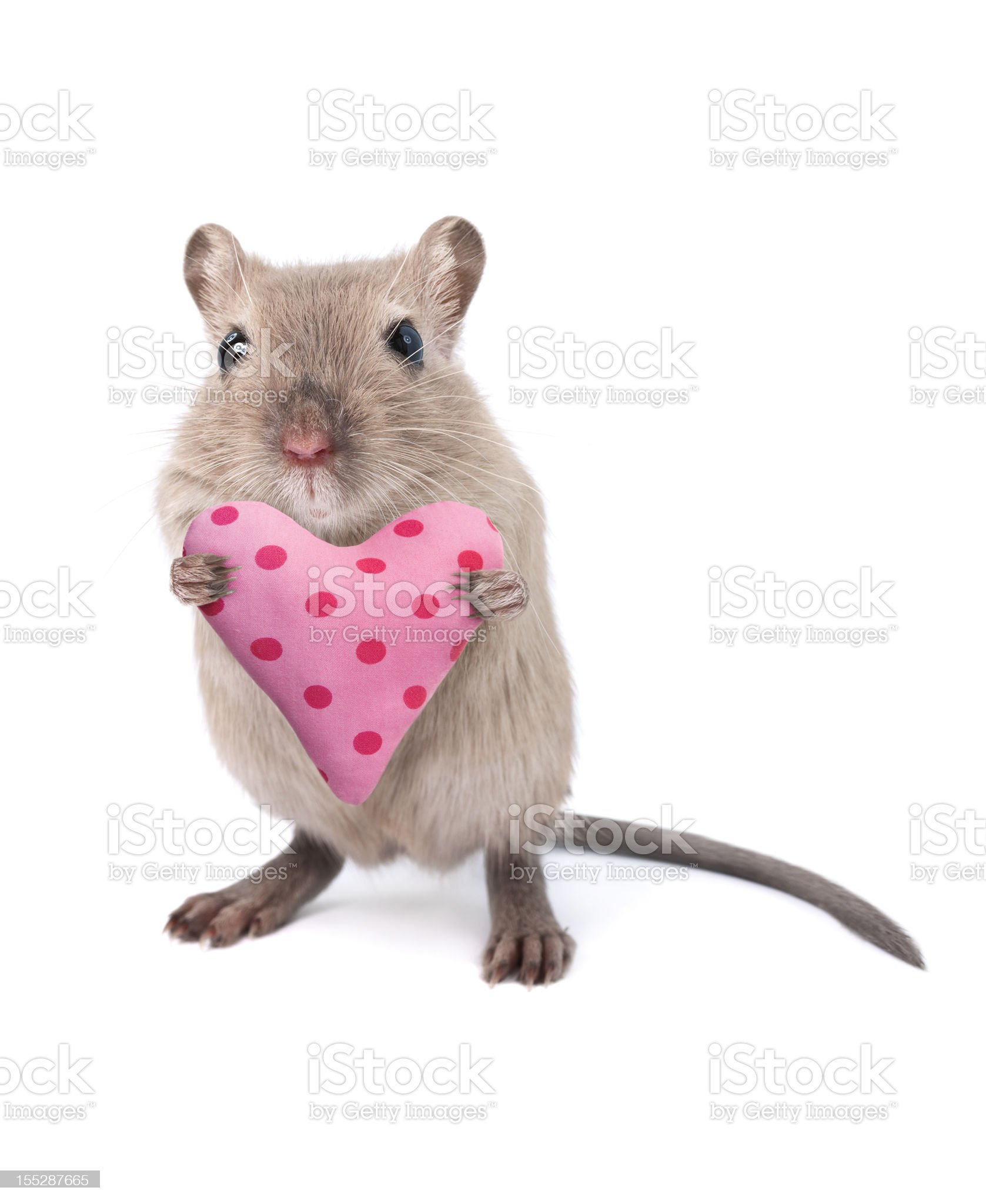 Mouse holding a heart shaped cushion royalty-free stock photo
