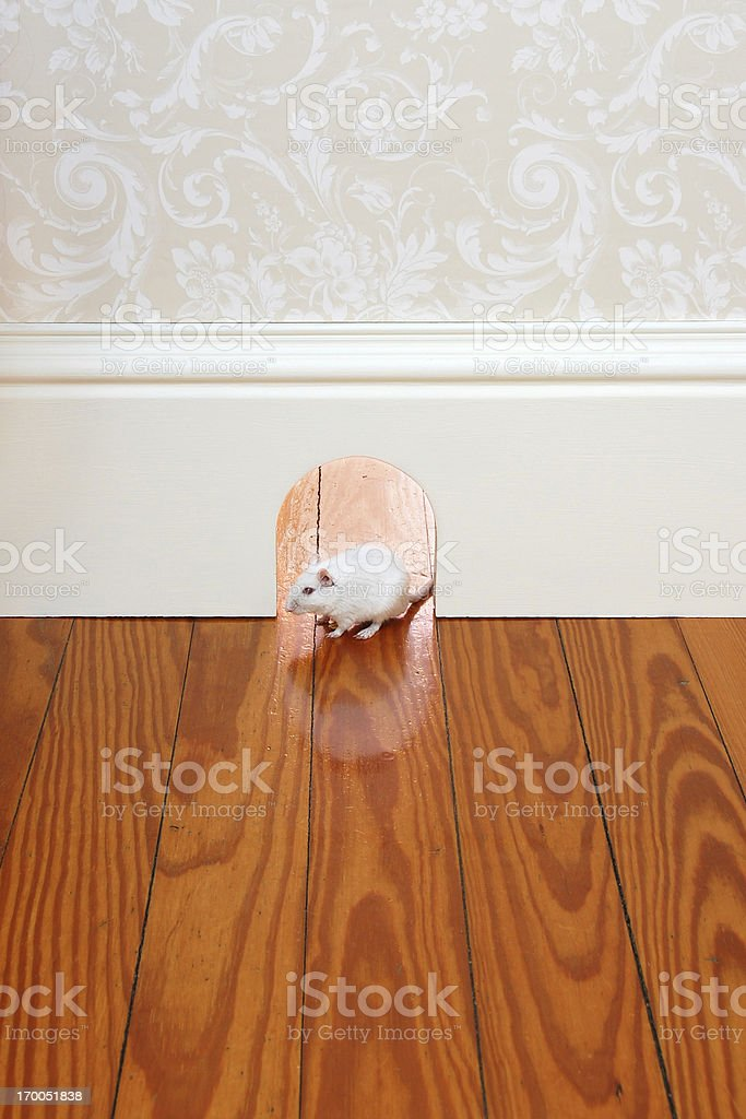Mouse Hole royalty-free stock photo