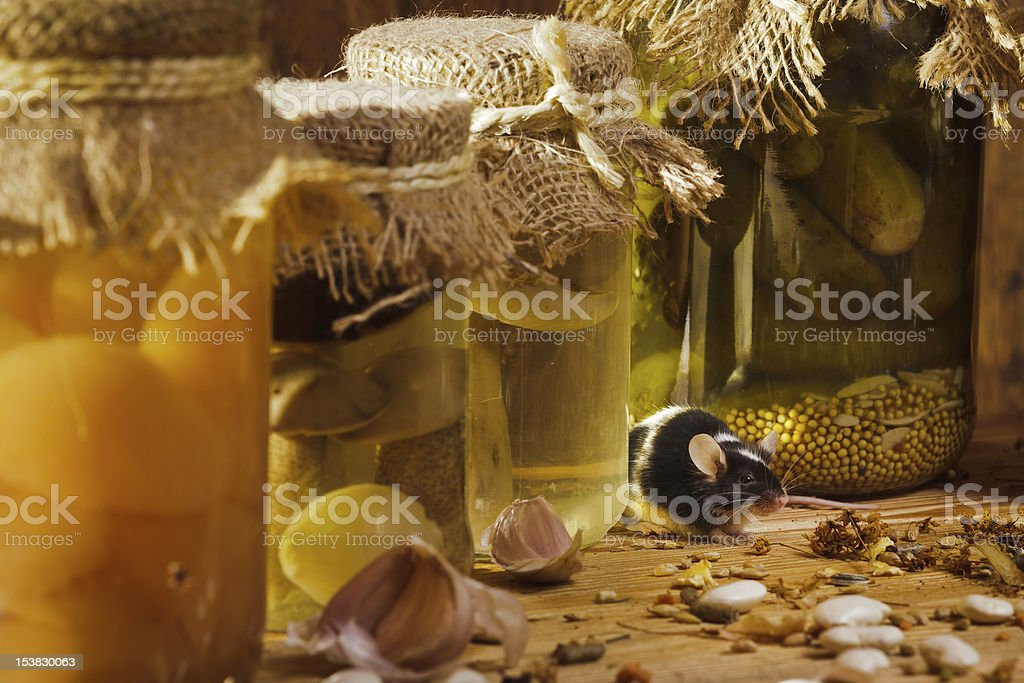Mouse in basement on shelf royalty-free stock photo