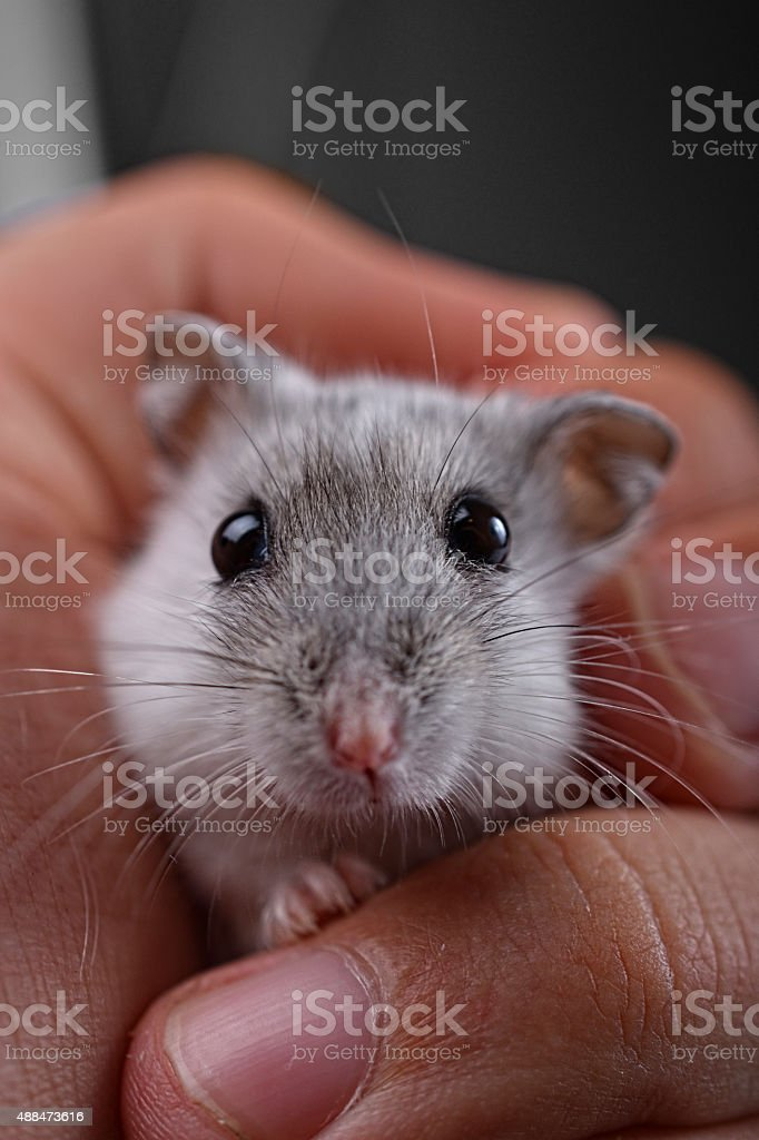 Mouse In Hand stock photo