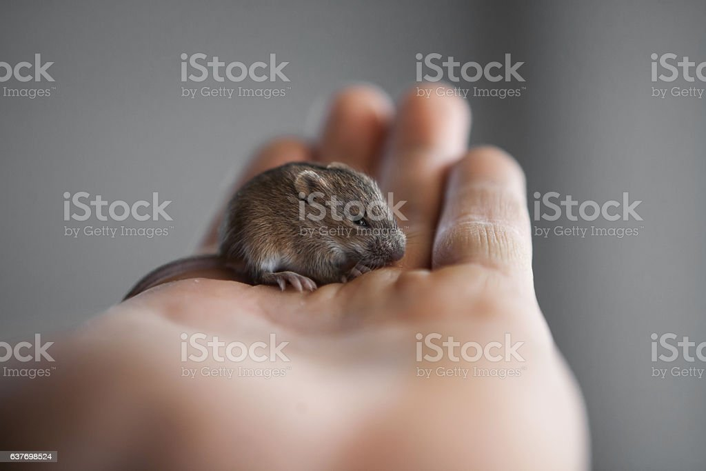 mouse in my hand stock photo