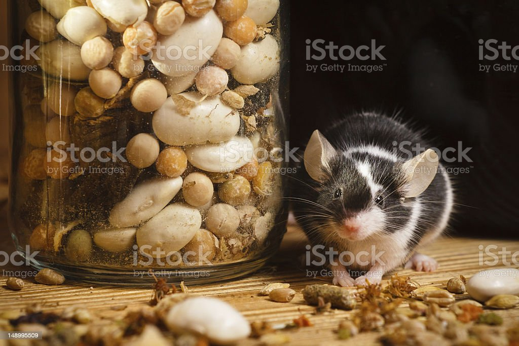 Mouse in old basement with herbs royalty-free stock photo
