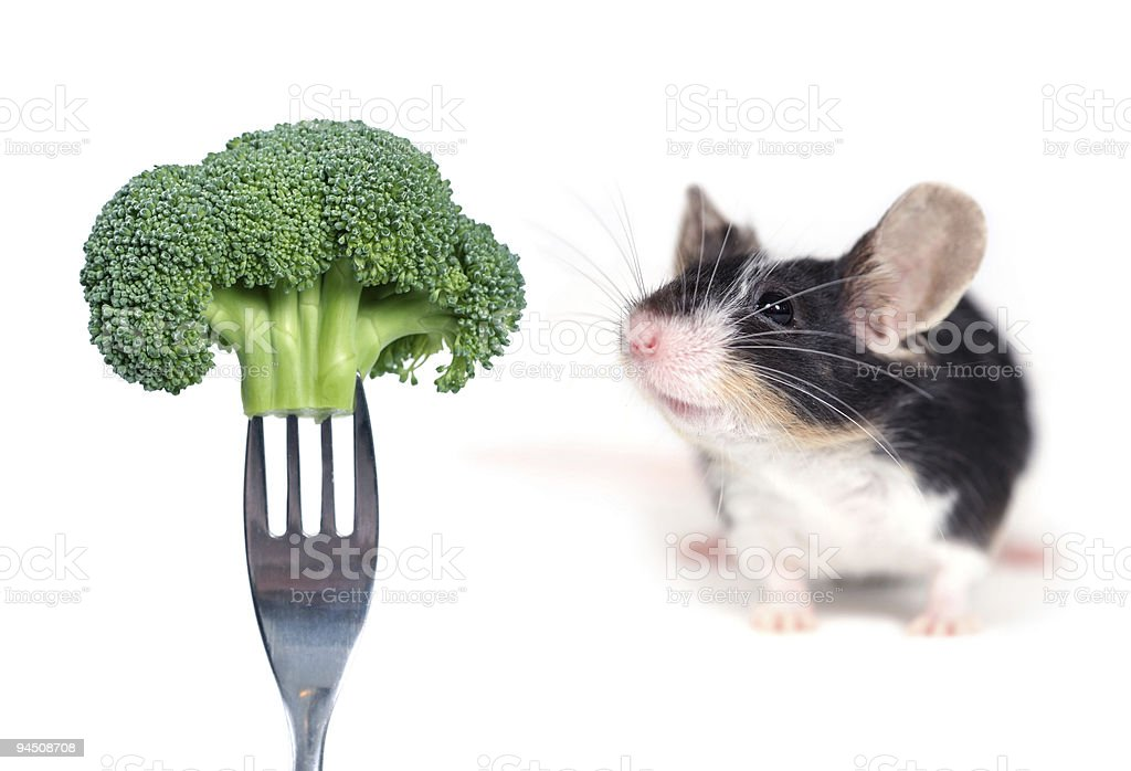 mouse smelling a broccoli royalty-free stock photo