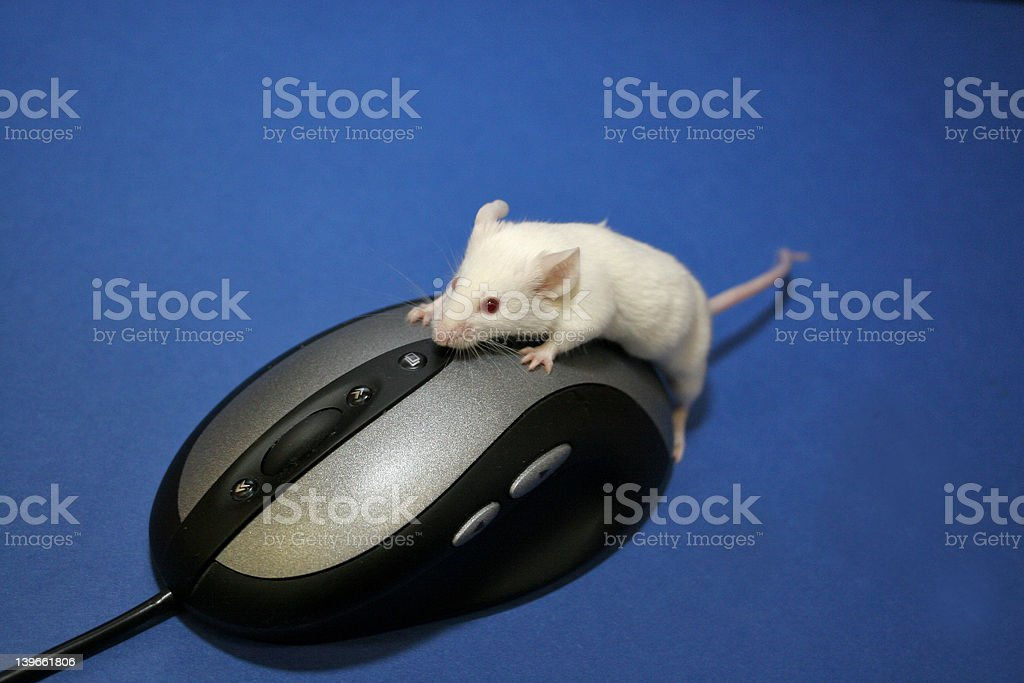 Mouse using mouse stock photo