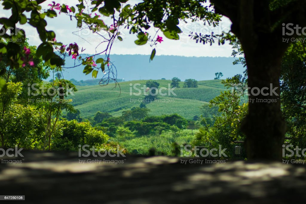 moutain view with blurred wooden floor stock photo