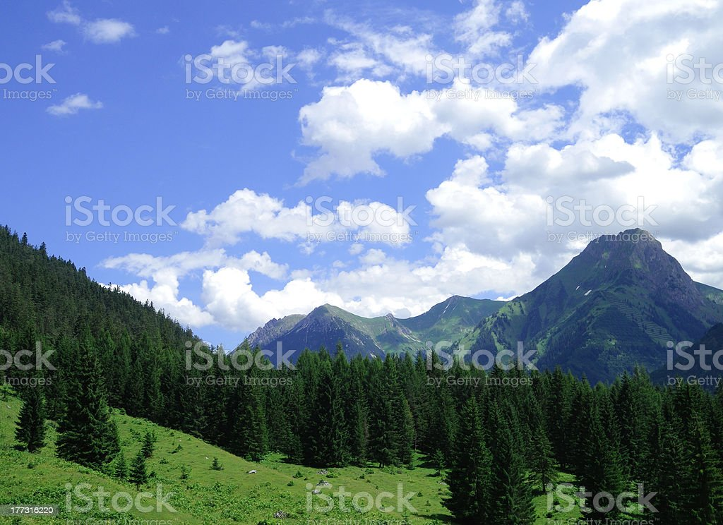 Moutains and firs royalty-free stock photo