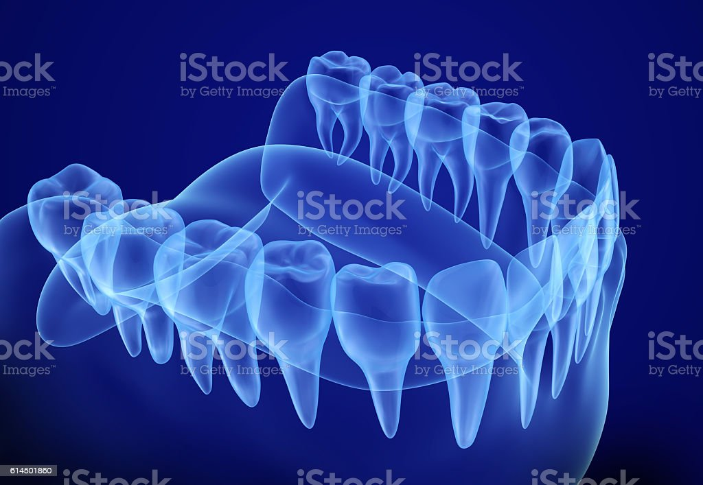 Mouth gum and teeth xray view. stock photo