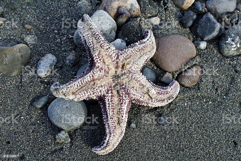 mouth of sea star stock photo