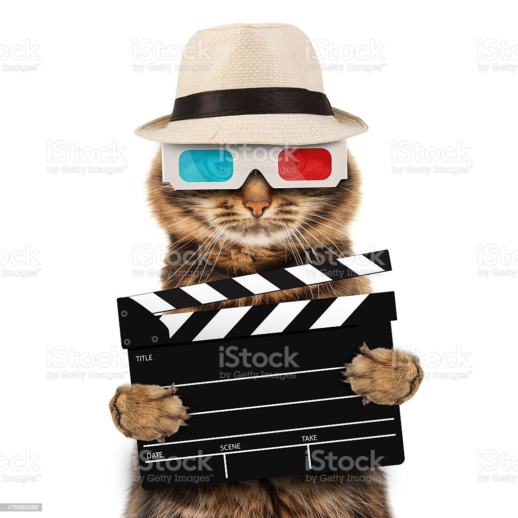 movie director cat with a clapperboard stock photo