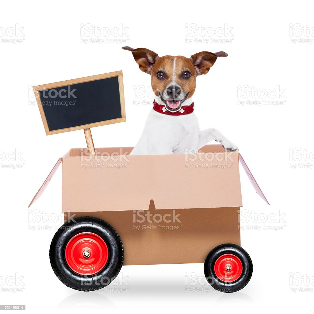 moving box dog stock photo