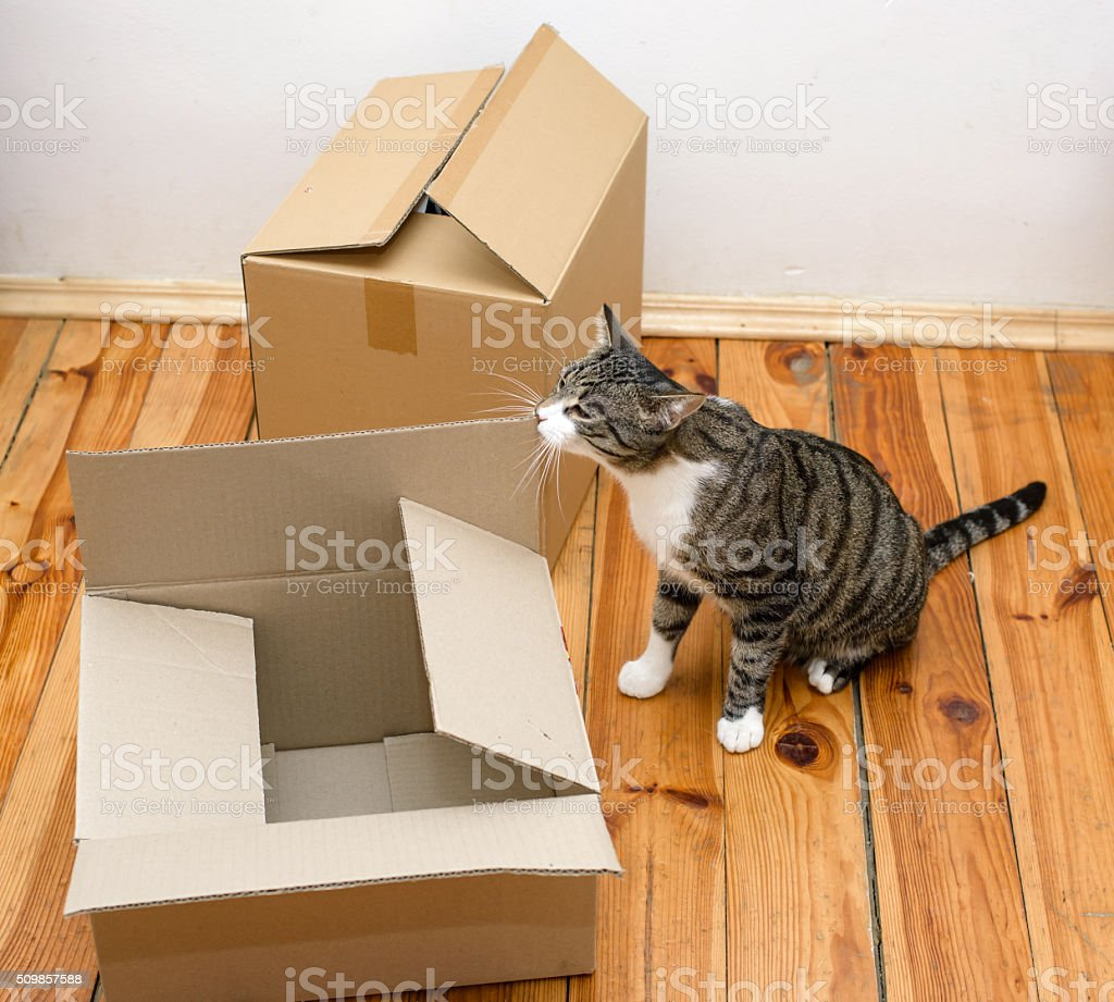 Moving day - cat and cardboard boxes stock photo