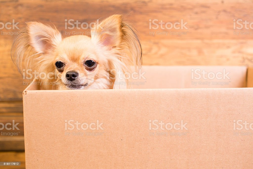 Moving day or dog pound.  Dog, puppy in cardboard box. stock photo