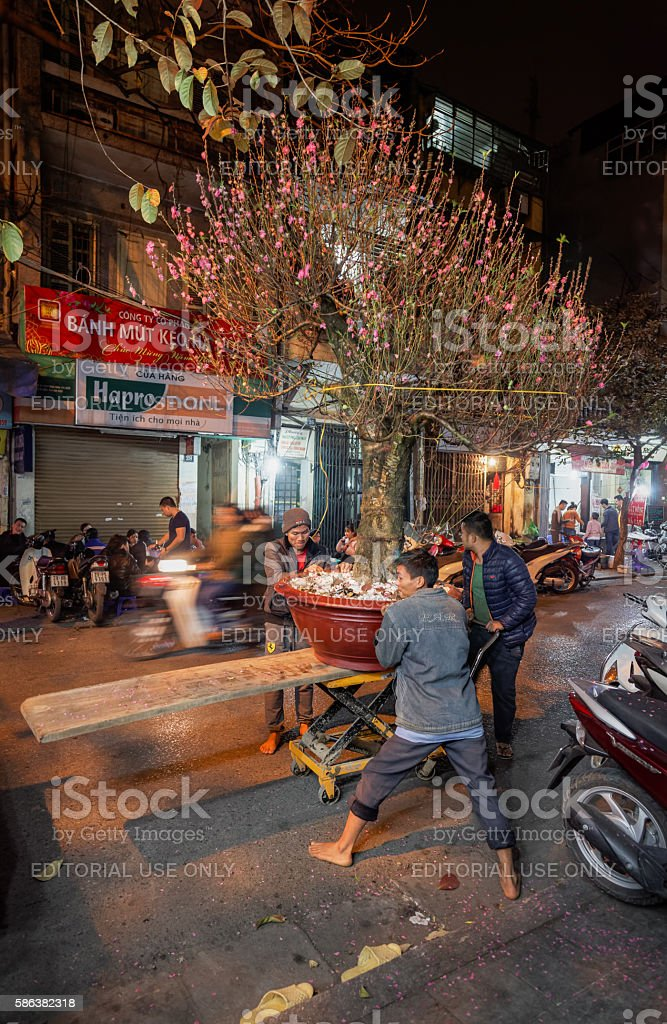 Moving peach tree with flowers in the streets of Hanoi stock photo