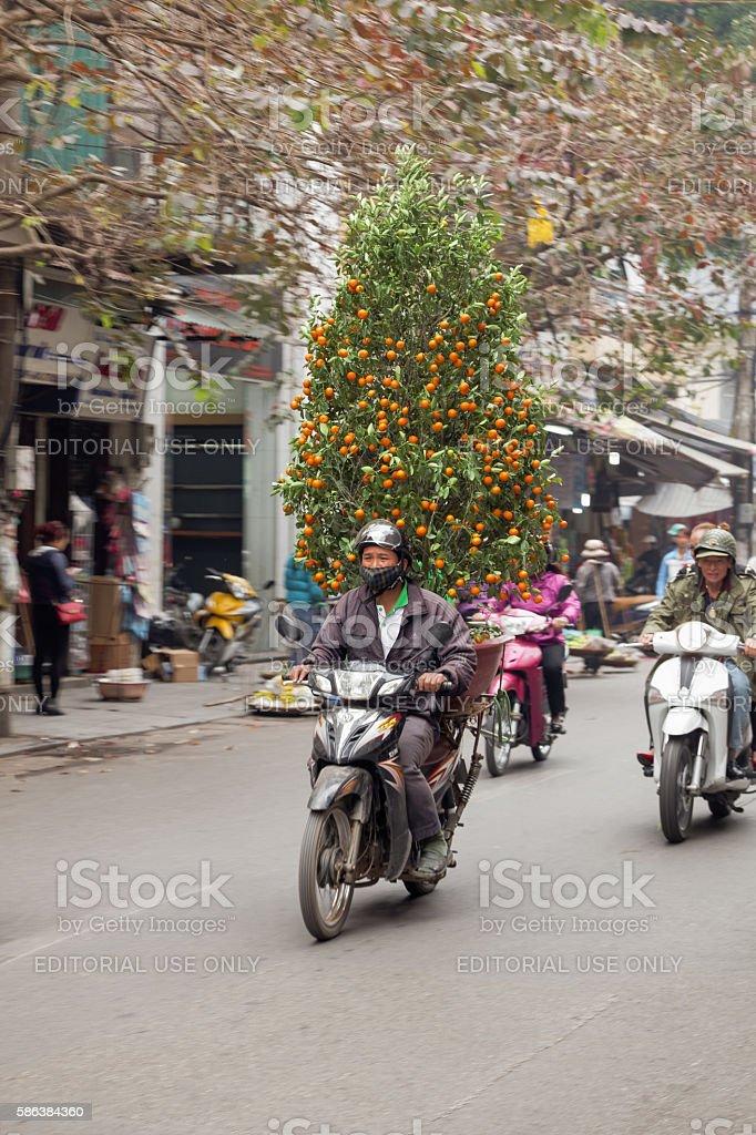Moving peach tree with oranges in Hanoi stock photo