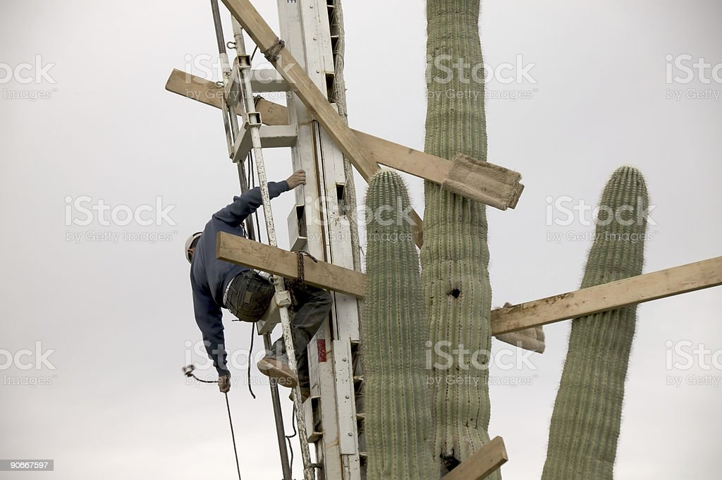 Moving Saguaro stock photo