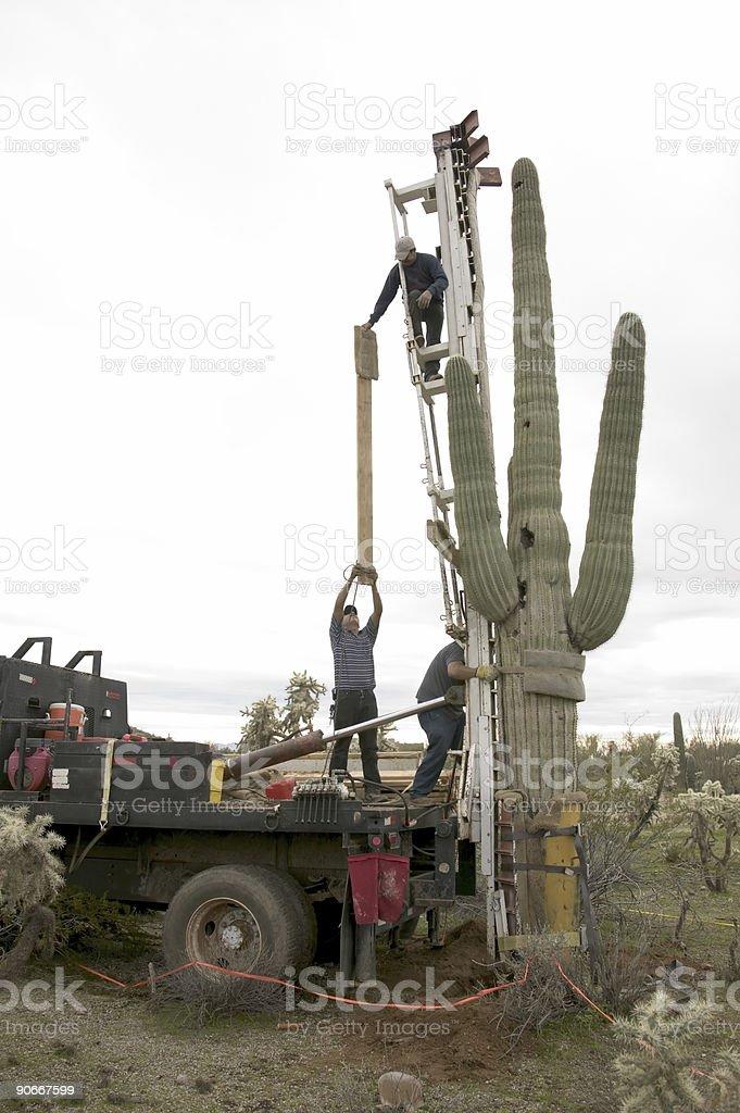 Moving Saguaro #2 stock photo