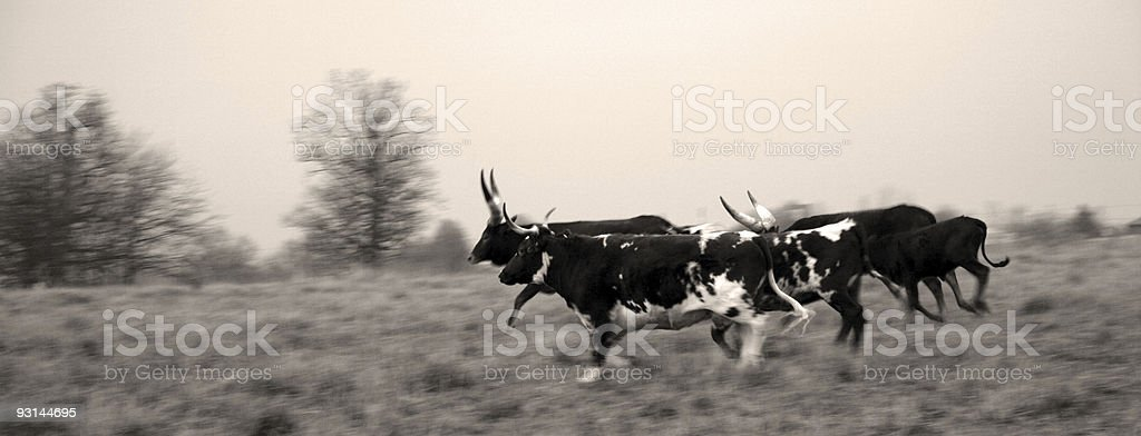 moving with the herd royalty-free stock photo