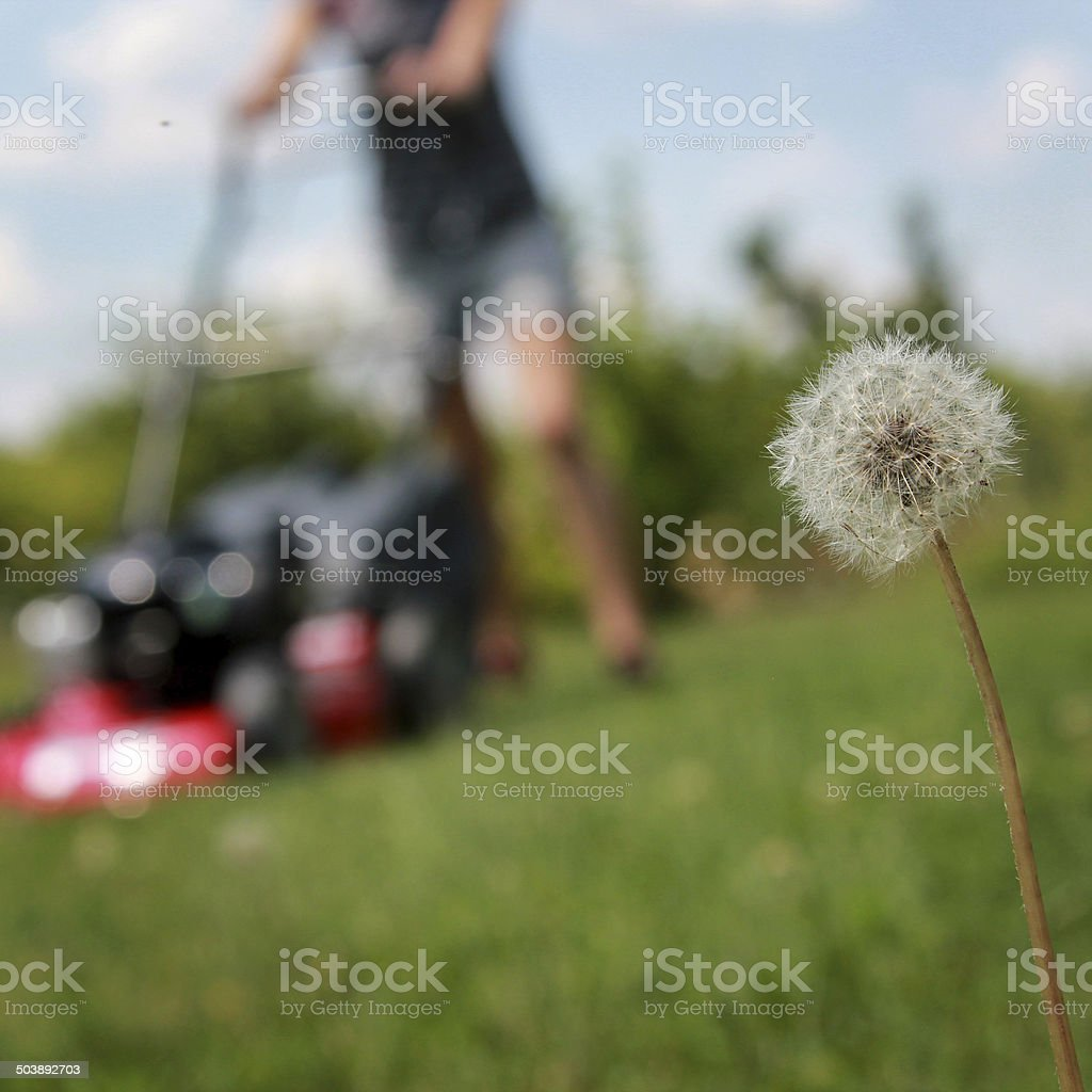 Mower stock photo