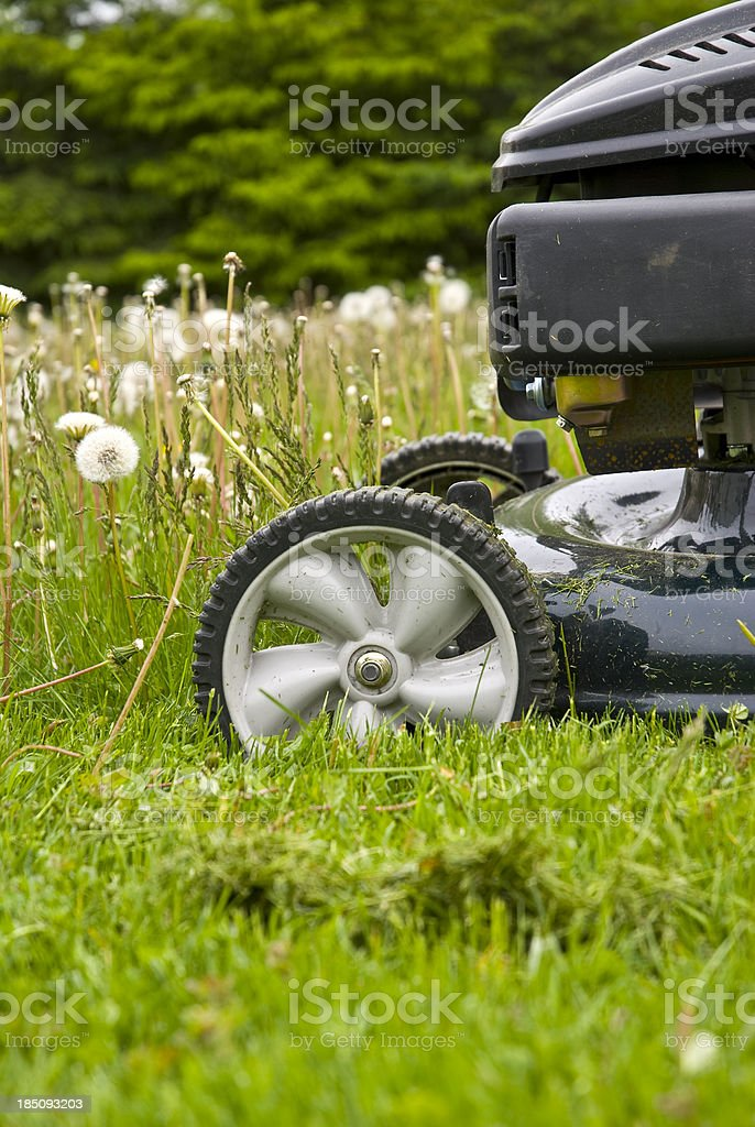 Mowing the grass... stock photo