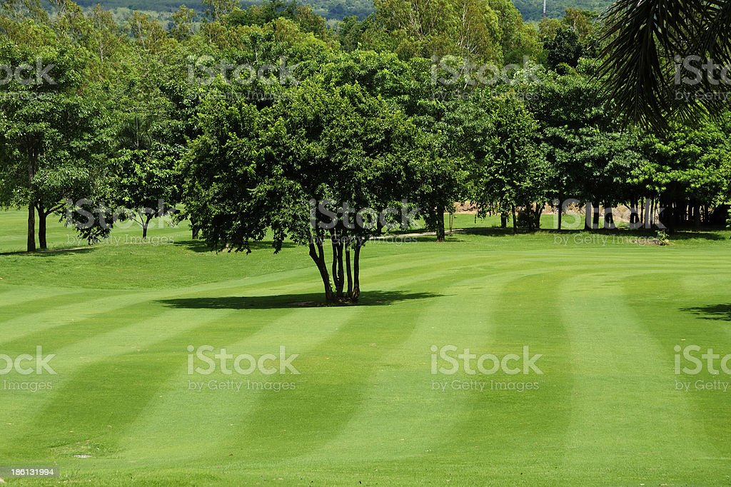 Mown lawn and trees in a golf course royalty-free stock photo
