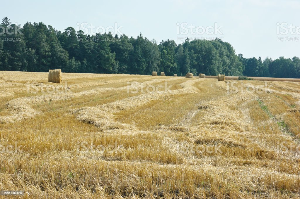 mown meadow hay roll stock photo