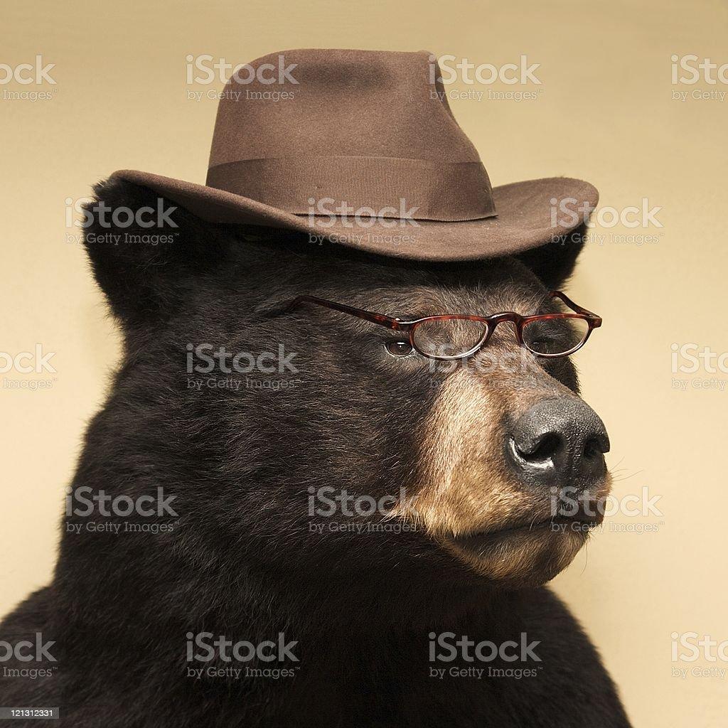 Mr. Bear stock photo