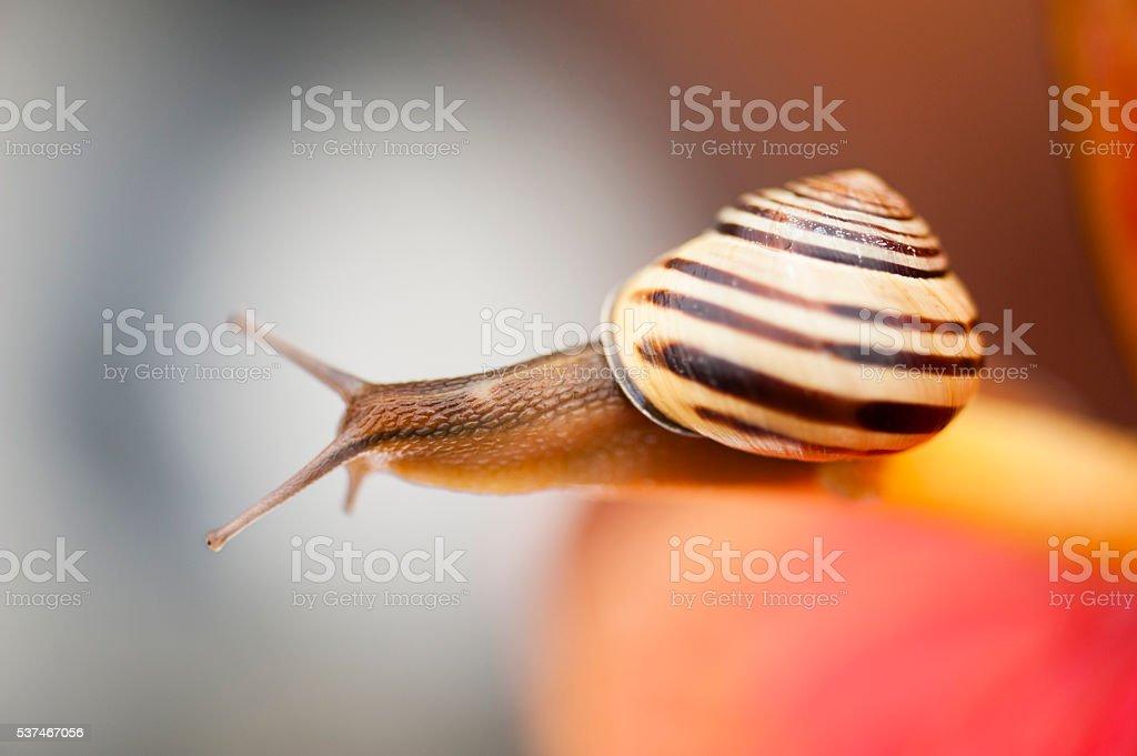 Mr. Snail Series stock photo
