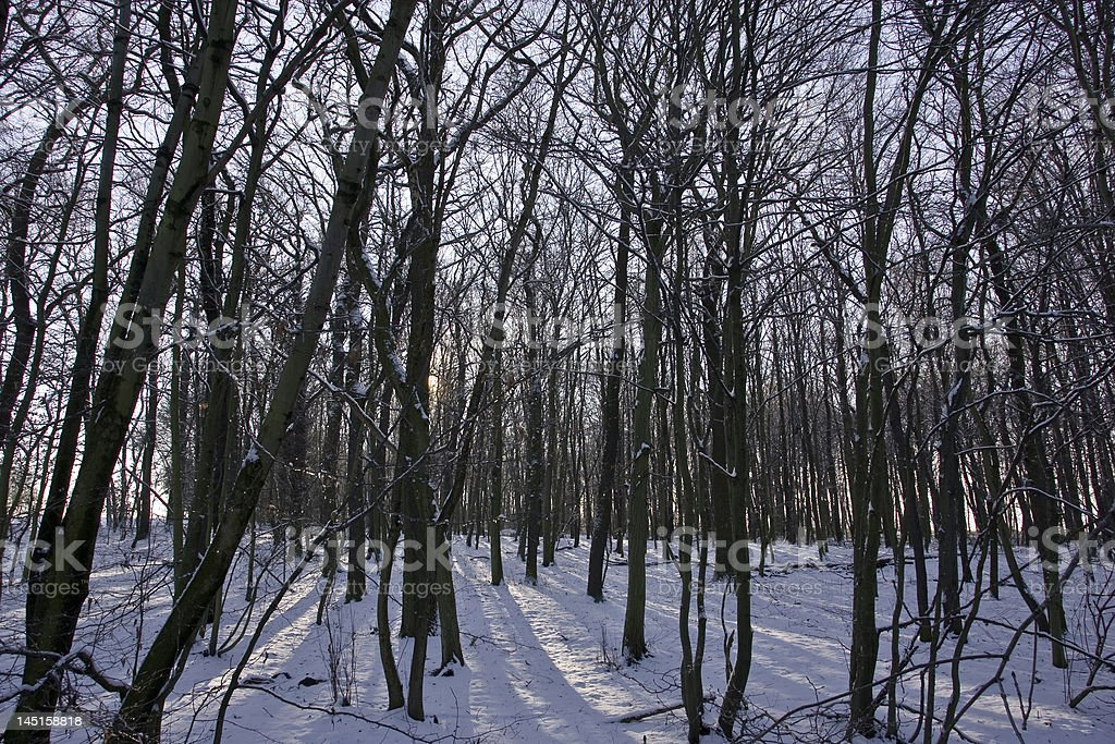 Märchenwald royalty-free stock photo