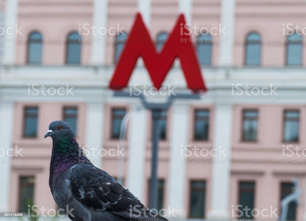 M-symbol of the underground metro and pigeon stock photo