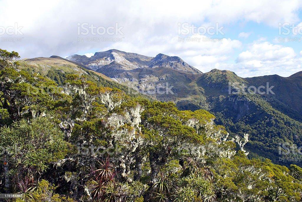 Mt Arthur, The Kahurangi National Park, New Zealand stock photo