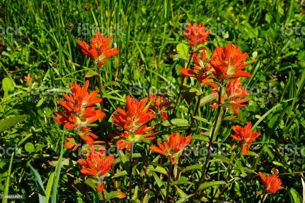 Mt. Baker Fire Flowers stock photo