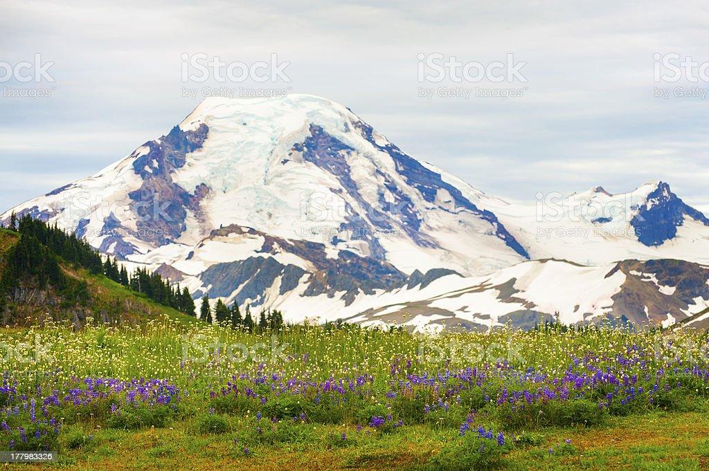 Mt. Baker, Washington, USA. royalty-free stock photo